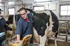 20171128_dairy_cattle_ultrasound_demonstration (UWMadisonCALS) Tags: dairycattle dairyscience ultrasound