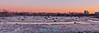 """Winterscape """"Magic Twilight Hour"""" with the Ancient Cedar Stumps and NY City Skyline at Mill Creek Marsh in Secaucus, NJ (Meadowlands) (takegoro) Tags: mill creek marsh"""" """"secaucus nj"""" meadowlands marsh wetlands nature pink twilight dusk magichour winter """"cedar stumps"""" ancient ice snow skyline """"empire state building"""" """"new york city"""" skyscraper """"432 park avenue"""" freedomtower"""