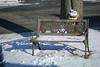 CF003074 (Paul Henegan) Tags: 32crop mamiya645afdii mamiyasekord645zoomaf75~150mm145snhh3007 bench highlights morninglight shadows snow winter