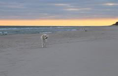Tina (malgorzata_p) Tags: labrador balticsea jastarnia baltic
