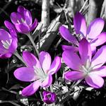 Grey and Purple thumbnail