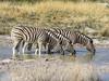 (petryklaus) Tags: afrika etosha namibia oshikotoregion na