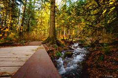 Bridal Veil Falls (samquattro) Tags: chilliwack imagesofcanada britishcolumbia outdoorvancouver canada explorecanada westcoast nature provincialpark beautifulbc hellobc