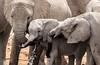 Olifantsbad (zimbart) Tags: etosha namibia okaukuejo africa fauna vertebrata mammals elephantidae loxodonta loxodontaafricana elephant proboscidea