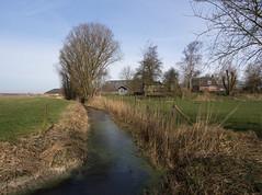 Toornwerd (Jeroen Hillenga) Tags: groningen hogeland netherlands nederland landscape landschap farming farmland wierde wierdenlandschap sloot ditch blauwelucht bluesky