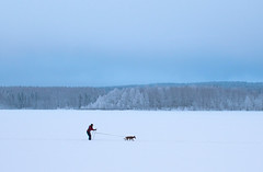 Forwards (bjorbrei) Tags: winter snow frost ice lake shore forest trees spruces sky skiing dog maridalen maridalsvannet lakemaridal oslo norway