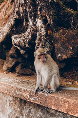 Monkey - Ganga Talao Hindu temple - Grand bassin - Mauritus - October 2017 (maudlecozannet) Tags: mauritus myfeatureshoot maurice magiclight monkey mothernature temple community ilemaurice zoom animal documentary documentaire canon50mm canon50mn aventure arbre canonphotography canon5d canon canonartists canonartist canonpahotography nature lake singe grandbassin jungle detail exterieur republicofmauritius leafs outdoor bois pierre stone