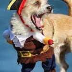 The Pirate Dog thumbnail
