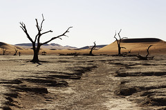 Surface from the Moon (T_Schildbach) Tags: sossusvlei namibia namib canon sigma desert trees tree