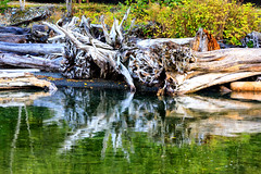 171011_122326_AB_1642 (aud.watson) Tags: canada britishcolumbia squamishlillooetregionaldistrict seatoskyhwy route99 howesound porteaucovepark porteau temperaterainforest ocean sea water reflection reflections driftwood fallentree root roots squamishlillooetd ca