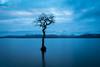 Milarrochy Bay (Alec-Gibson) Tags: milarrochybay lochlomond scotland longexposure leefilter landscape