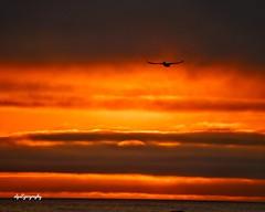 Sunset vibes (al.mistry) Tags: nikond7500 nikon dcphotographer amazingnature sunsetcolor sunset instagram florida destin