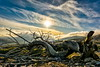 Forgotten (HDR) (panos_adgr) Tags: sony a6000 hdr greece attica parnitha tree sky sun sunset clouds drama view landscape field colours silhouette