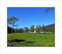 Rheinhessen - Frühlingswiese am Appelbachradeg (hans.hameldinger@yahoo.com) Tags: