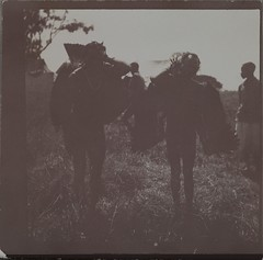 Akseli Gallen-Kallela's servants carry dead vultures. (The Gallen-Kallela Museum) Tags: safari tana river kenia kenya afrikka africa vulture haaskalintu stereokuva stereograph metsästys hunting linnut birds