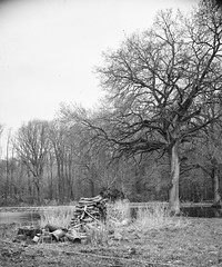 250218-2 (salparadise666) Tags: ica universal palmos 275 fomapan 100 caffenol cl semistand 45min nils volkmer vintage large format 9x12 view analogue film camera landscape bw black white monochrome vertical hannover region niedersachsen germany north german plains