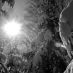 winter flare thumbnail