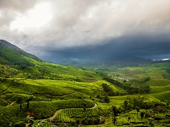 Beauty of Munnar, India. (vikramgopinath) Tags: nature india scenery cool world clouds rain mist greenery rustic plantation mountain hill tree land soil horizon chill casual picture