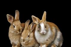 Easter bunnies (Palmsgb) Tags: bunny rabbit furry cute photoshop greycstoration