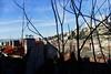 Vue entrecoupée depuis l'escalier (8pl) Tags: branchages immeubles maisons paysageurbain branches ombreetsoleil ombre soleil cheminées rijeka montagnesauloin
