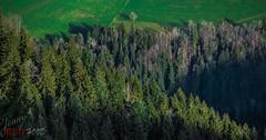 Mr. General President (Redhood Photography) Tags: landscape landschaft landschaftsfotografie landscapephotography nature natur natura natural national nationale mountains swiss schweiz switzerland schwyz