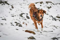 Savona e la neve (freguggin2010) Tags: nikon neve mare spiaggia cani savona inverno