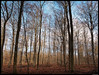 Winterwald I (ej foto) Tags: winterwald ejfotografik mettlach germany new trail landscape panorama nature trees green light sun fog clouds autumn sky photography mft microfourthird flickr flickriver most interesting explore
