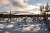 Winter Morning (Aymeric Gouin) Tags: canada ontario brucepeninsula lake huron lac landscape paysage paisaje landschaft nature winter hiver morning matin sunrise sun light snow neige cold froid travel voyage aymgo aymericgouin fujifilm xt2