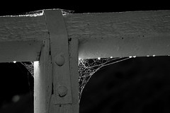 Dawn on the bridge (OzzRod) Tags: pentax k1 hdpentaxdfa150450mmf4556 dawn bridge fence railing post web dew droplet monochrome blackandwhite murrah