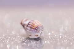 Speckled (G_HOWDEN) Tags: macromondays speckled hmm shell tiny bokeh