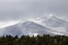 Windy! (Jeff Mitton) Tags: wind snow blowingsnow mountains colorado landscape mountainside mountain wilderness alpine tundra trees conifers ponderosapine lodgepolepine douglasfir