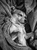 Sleeping Chorgi (jmhull.LA) Tags: dog chorgi corgichihuahua blanket sleeping chihuahuacorgi