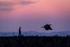 黄昏散歩 #2ーTwilight walker #2 (kurumaebi) Tags: yamaguchi 秋穂 nikon d750 山口市 nature landscape 風景 自然 sea 海 sunset 夕焼け 漁港 fishingport