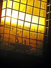(Karolina Szala) Tags: light lizard night warm pals spain reptile lantern catalonia