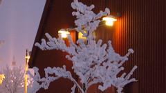 IMG_4366 (Mr Thinktank) Tags: raureif frost