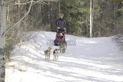 IMG_9366 (zawaski -- Thank you for your visits & comments) Tags: dogsledding ©robertzawaski® fun boundry ranch snowwinter maddogsandenglishman ©2019robertzawaski ©2019 robert zawaski ©2019zawaski finephotography photog ambieantlight beauty