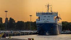 Port Gdańsk, wolny obszar celny i wiele Nissanów-09293