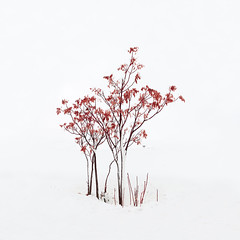 Red minimalism (Pedro Díaz Molins) Tags: snow tree red minimalism minimalist minimalista minimal minimalismo white pedro diaz molins