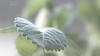 Leaf. (53Hujanen) Tags: lappeenranta suomi finland scandinavia skandinavia luonto nature naturelight naturallight kasvi plant green vihreä kesä summer canon canoneos700d