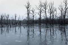 Waldwasser... (st.weber71) Tags: nikon d850 germany wasser bäume deutschland niederrhein sw bw colorkey schwarzweiss blackandwhite wald see natur outdoor landschaft landscape