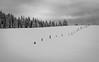 Fence 1 (GeoMatthis) Tags: landscape winter snow gray white black fence forrest ski alps austria landschaft schnee grau weis schwarz alpen österreich kitzbühel scheffau tirol