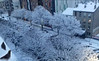 Paris under snow (Ennya2000) Tags: france paris snow globalwarming climatechange drought snowstorm davidsuzuki trees