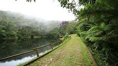 Mist over the forest / Bruma sobre a floresta (Higino Silva) Tags: bruma mist parqueestadualserradobrigadeiro arapongamg mataatlântica atlanticrainforest