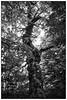 Tree (unukorno) Tags: tree baum forest vilm rügen putbus mecklenburgvorpommern deutschland bw sw monochrome blackwhite frame rahmen