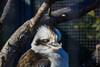 DSC_0068 (kubek013) Tags: stuttgart germany niemcy deutschland wycieczka wanderung trip sightseeing besichtigung stadt city citytour stadtrundfahrt zwiedzanie zoo wilhelma
