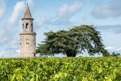 P1000849-1web (ADK_59) Tags: mecoc vin tour bordeaux chateaulatourdeby