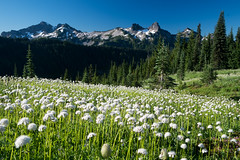 Paradise (Laura Jacobsen) Tags: mtrainier mtrainiernationalpark nationalparks paradise rainier washington wildflowers