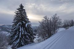 Feldberg | Black Forest | Germany (*Photofreaks*) Tags: feldberg schwarzwald blackforest trees baum snow schnee deutschland germany wald forests woods winter bäume wälder badenwürttemberg adengs wwwphotofreakseu