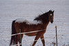Horse (Tony Webster) Tags: hassanparkway minnesota rogers farm field horse snow snowcovered winter unitedstates us