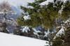 (AleAinaz) Tags: incendio valle di susa torino boschi rocciamelone montagna alberi gelo rami